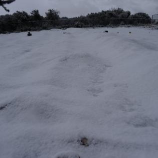 """כישורית - חקלאות בשלג (8) • <a style=""""font-size:0.8em;"""" href=""""http://www.flickr.com/photos/143413673@N05/29588447662/"""" target=""""_blank"""">View on Flickr</a>"""