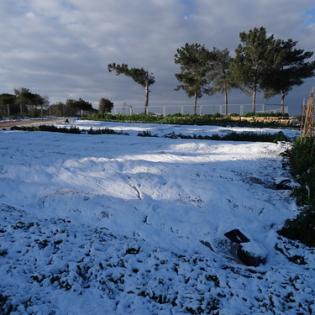 """כישורית - חקלאות בשלג (6) • <a style=""""font-size:0.8em;"""" href=""""http://www.flickr.com/photos/143413673@N05/29588447392/"""" target=""""_blank"""">View on Flickr</a>"""