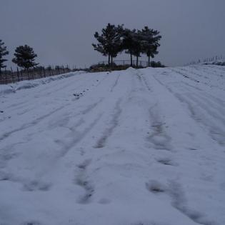 """כישורית - חקלאות בשלג (11) • <a style=""""font-size:0.8em;"""" href=""""http://www.flickr.com/photos/143413673@N05/29588446812/"""" target=""""_blank"""">View on Flickr</a>"""