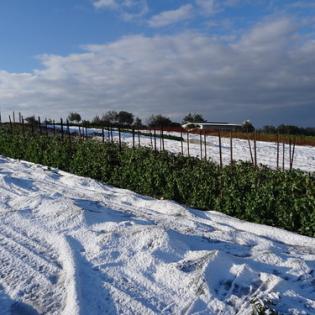 """כישורית - חקלאות בשלג (2) • <a style=""""font-size:0.8em;"""" href=""""http://www.flickr.com/photos/143413673@N05/29588447222/"""" target=""""_blank"""">View on Flickr</a>"""