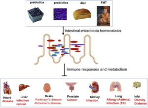 Figure 1and 2 Microbiota and organs.pptx