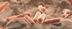 חיידקים מועילים